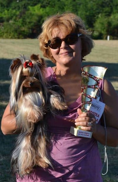 Purebred Yorkshire Terrier breeder | Luxe York of Canada